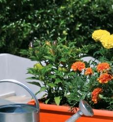 Festone-jardinieres
